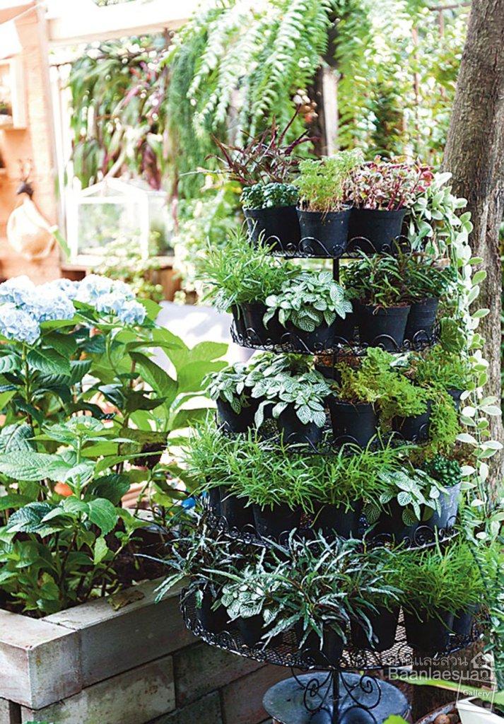 """บ้านและสวน - สัมภาษณ์ """"สวนกระบะใส่ใจ สวนกระถางใส่รัก"""""""